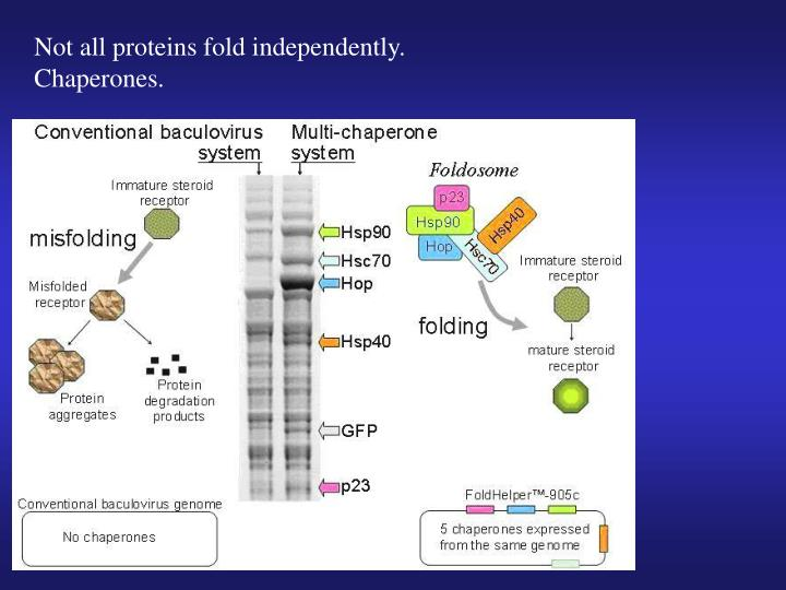Not all proteins fold independently.