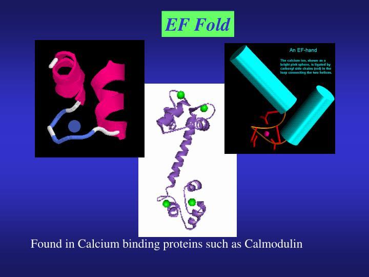 EF Fold