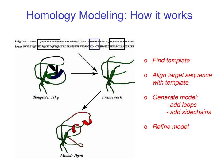 Homology Modeling: How it works