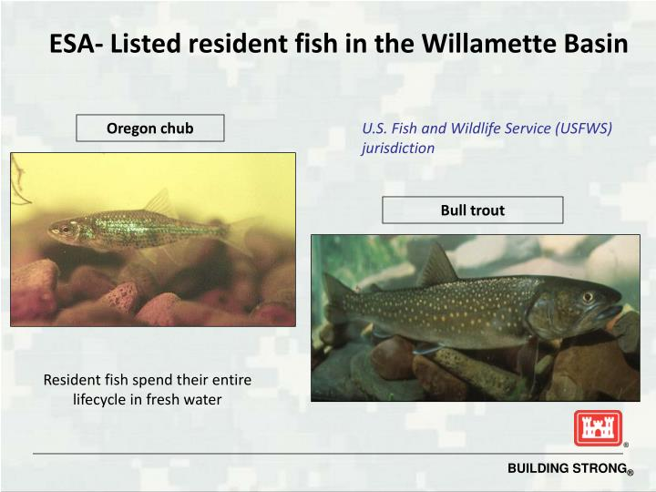 ESA- Listed resident fish in