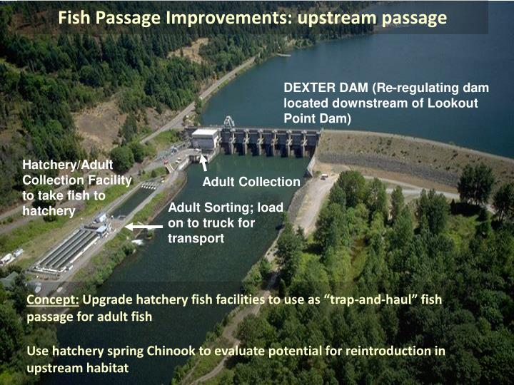 Fish Passage Improvements: upstream passage
