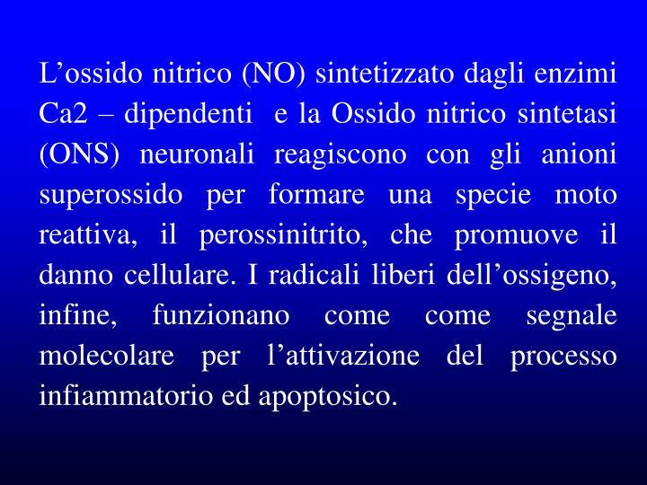L'ossido nitrico (NO) sintetizzato dagli enzimi Ca2 – dipendenti  e la Ossido nitrico sintetasi (ONS) neuronali reagiscono con gli anioni superossido per formare una specie moto reattiva, il perossinitrito, che promuove il danno cellulare. I radicali liberi dell'ossigeno, infine, funzionano come come segnale molecolare per l'attivazione del processo infiammatorio ed apoptosico.