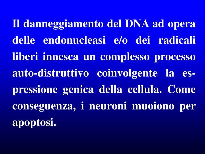 Il danneggiamento del DNA ad opera delle endonucleasi e/o dei radicali liberi innesca un complesso processo auto-distruttivo coinvolgente la es-pressione genica della cellula. Come conseguenza, i neuroni muoiono per apoptosi.