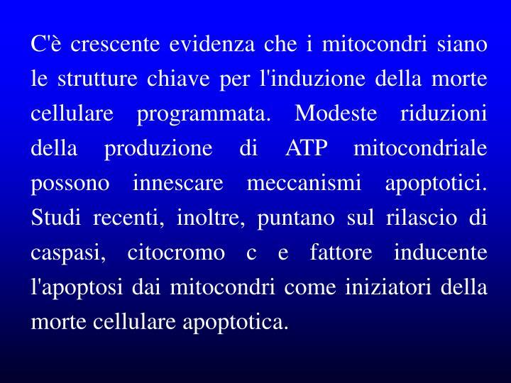 C'è crescente evidenza che i mitocondri siano le strutture chiave per l'induzione della morte cellulare programmata. Modeste riduzioni della produzione di ATP mitocondriale possono innescare meccanismi apoptotici. Studi recenti, inoltre, puntano sul rilascio di caspasi, citocromo c e fattore inducente l'apoptosi dai mitocondri come iniziatori della morte cellulare apoptotica.