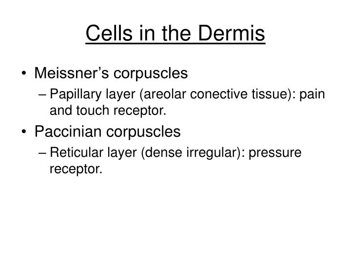 Cells in the Dermis