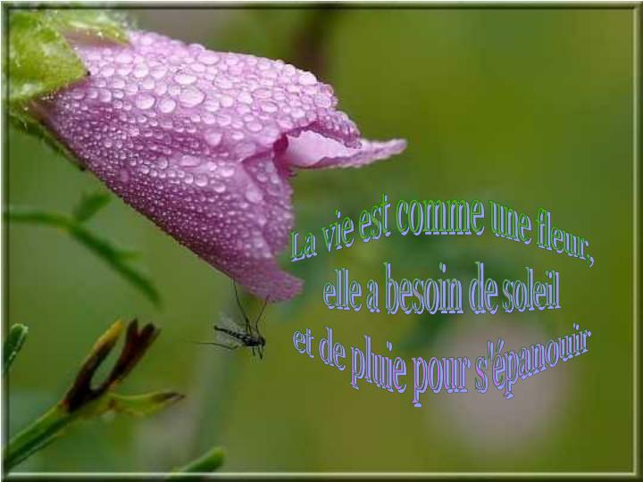 La vie est comme une fleur,