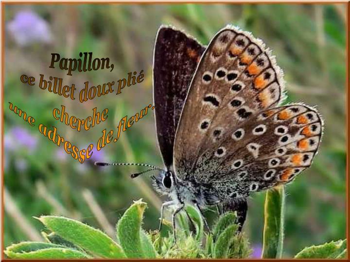 Papillon,