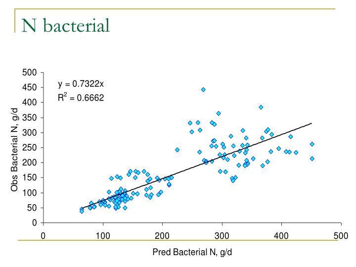 N bacterial