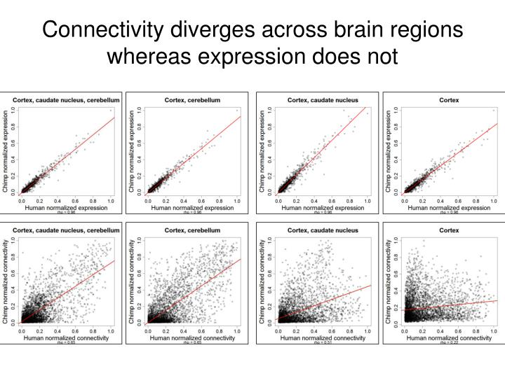 Connectivity diverges across brain regions whereas expression does not