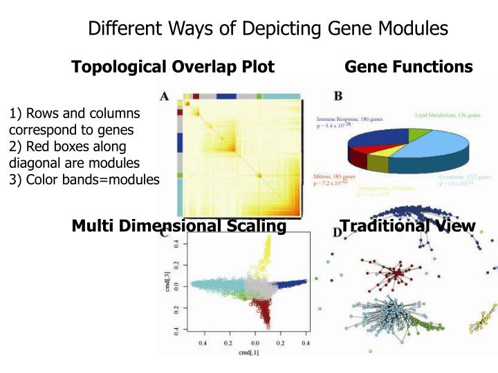 Different Ways of Depicting Gene Modules