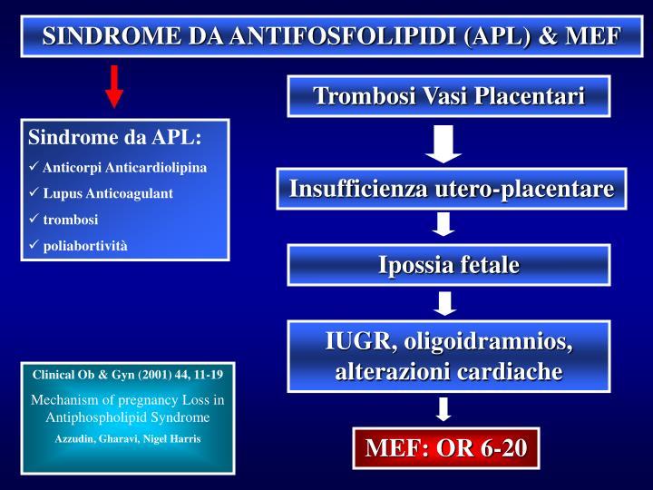 SINDROME DA ANTIFOSFOLIPIDI (APL) & MEF