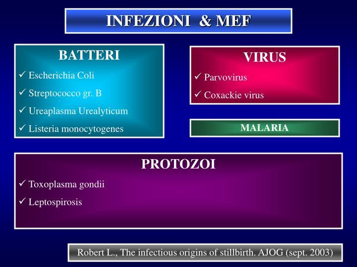 INFEZIONI  & MEF
