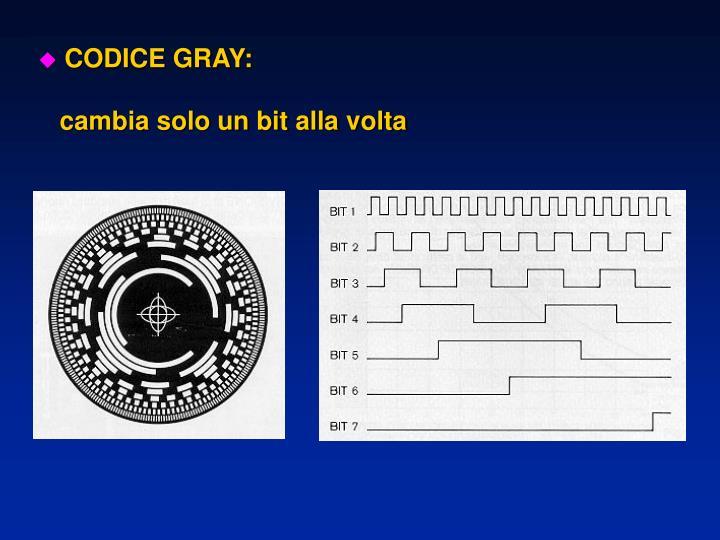 CODICE GRAY: