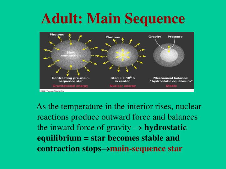 Adult: Main Sequence