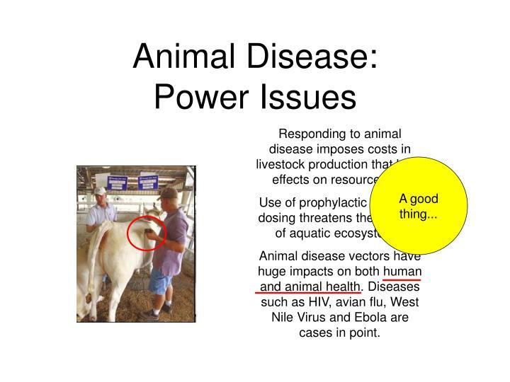 Animal Disease: