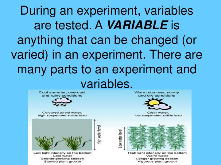 During an experiment, variables are tested. A