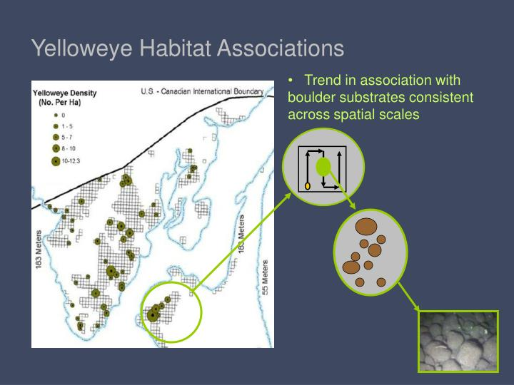 Yelloweye Habitat Associations