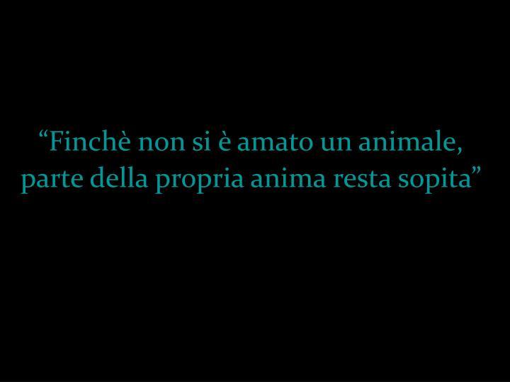 """""""Finchè non si è amato un animale,"""