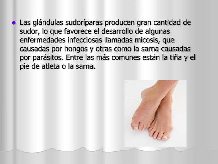 Las glándulas sudoríparas producen gran cantidad de sudor, lo que favorece el desarrollo de algunas enfermedades infecciosas llamadas micosis, que causadas por hongos y otras como la sarna causadas por parásitos. Entre las más comunes están la tiña y el pie de atleta o la sarna.