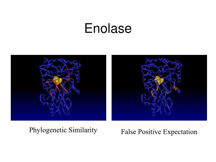 Enolase