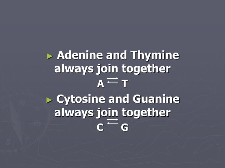 Adenine and Thymine always join together