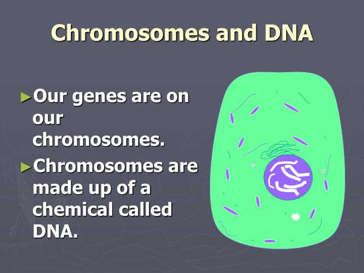 Our genes are on our chromosomes.