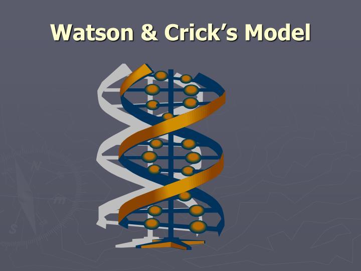 Watson & Crick's Model