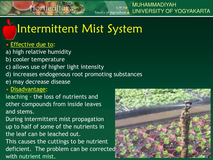 Intermittent Mist System : Ppt non adventitious roots powerpoint presentation id