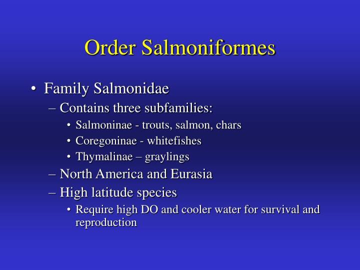 Order Salmoniformes