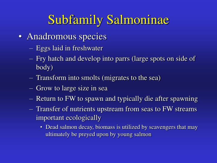 Subfamily Salmoninae