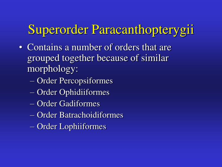 Superorder Paracanthopterygii