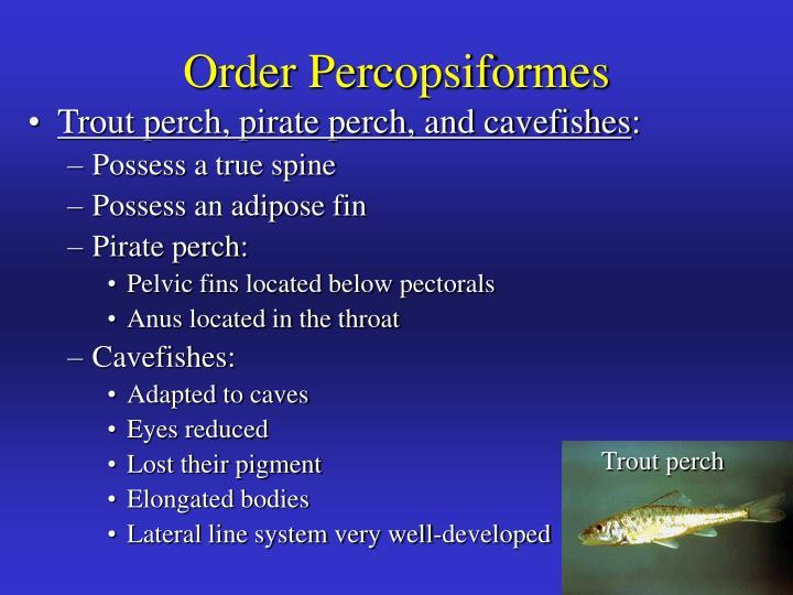 Order Percopsiformes