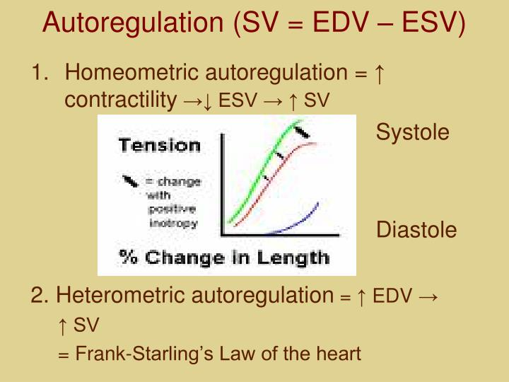 Autoregulation (SV = EDV – ESV)