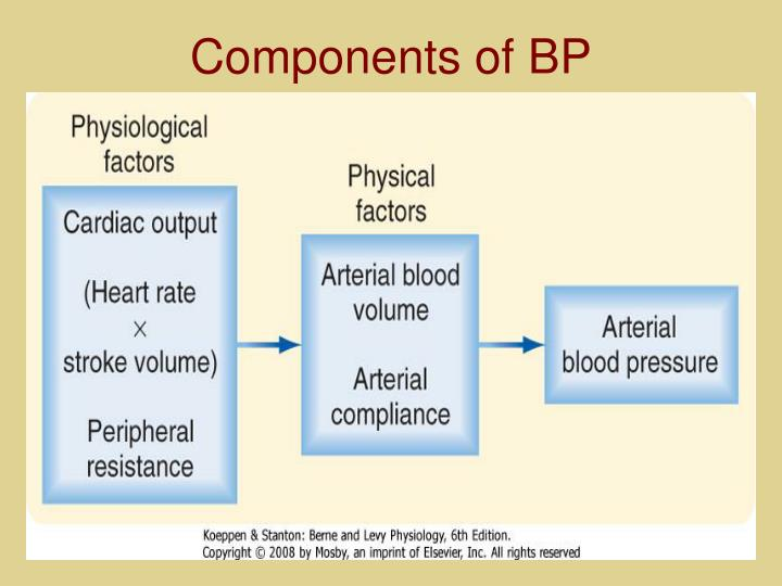 Components of BP
