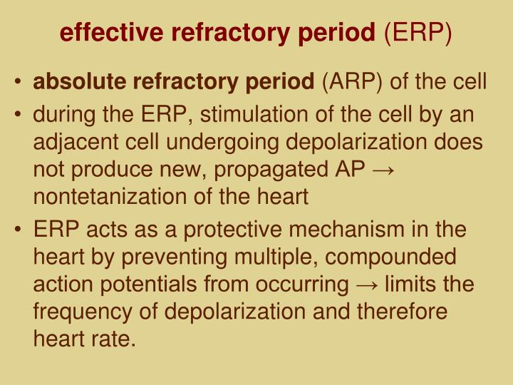 effective refractory period