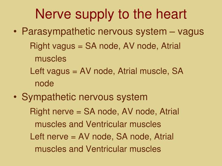 Nerve supply to the heart