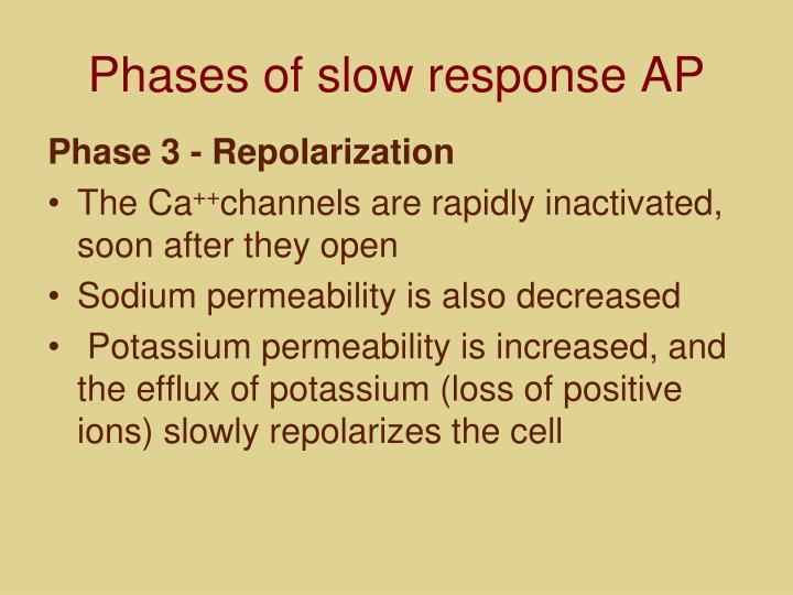 Phases of slow response AP