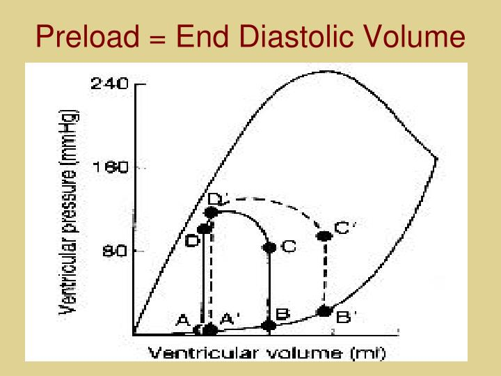 Preload = End Diastolic Volume