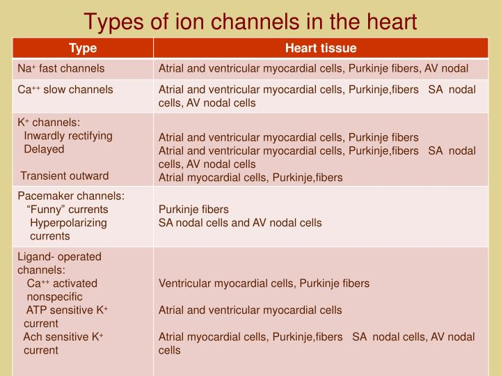 Types of ion channels in the heart