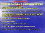 background avian influenza human influenza