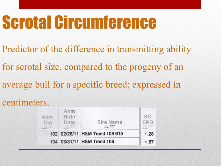Scrotal Circumference