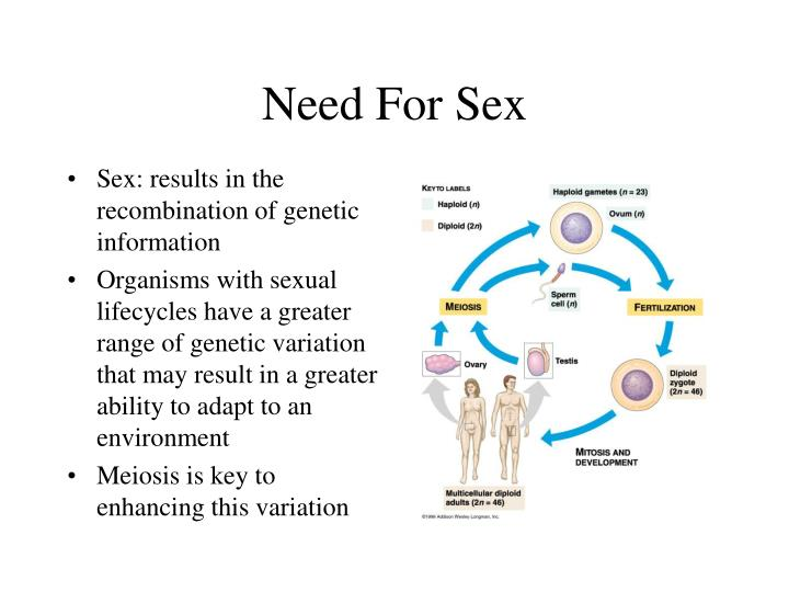 Need For Sex