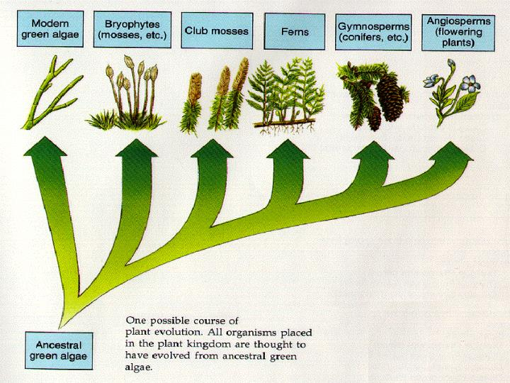 Chapter 32 plant reproduction