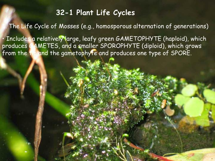 32-1 Plant Life Cycles