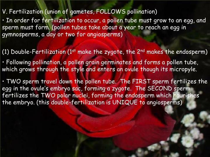 V. Fertilization (union of gametes, FOLLOWS pollination)