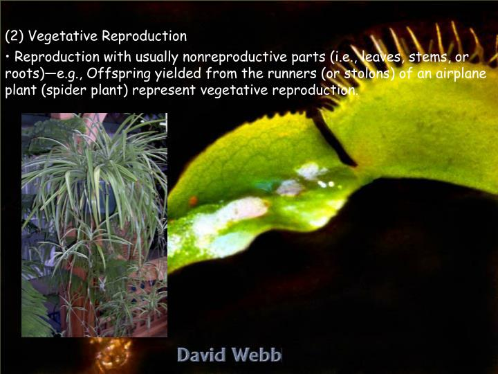 (2) Vegetative Reproduction