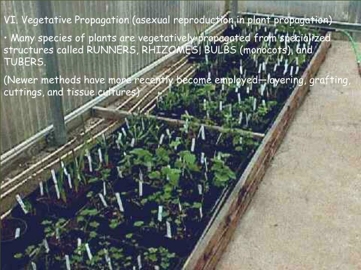 VI. Vegetative Propagation (asexual reproduction in plant propagation)