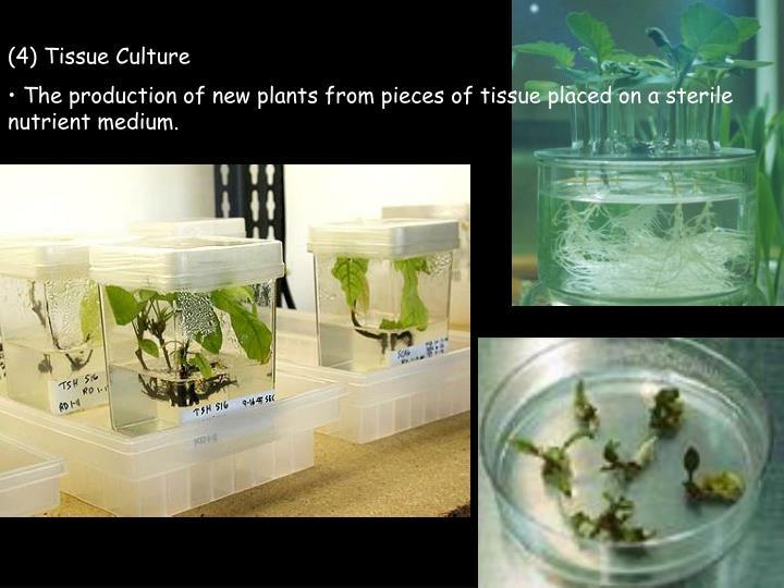 (4) Tissue Culture