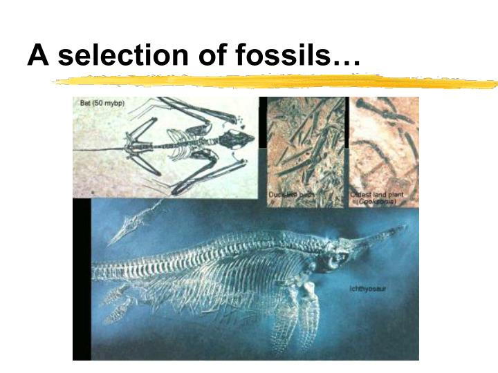 A selection of fossils…