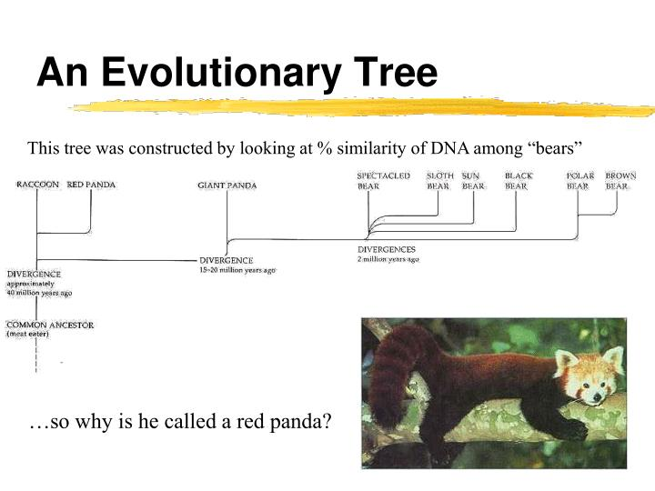 An Evolutionary Tree